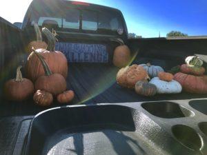 Pumpkins on Tailgate